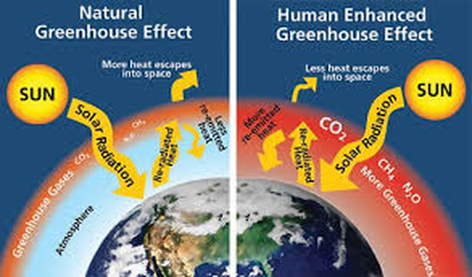 Apes carbon cycle and the greenhouse effect ap environmental science picture ccuart Image collections